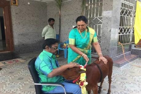 Vijayakanth cow